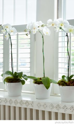 Things We Love: Orchids