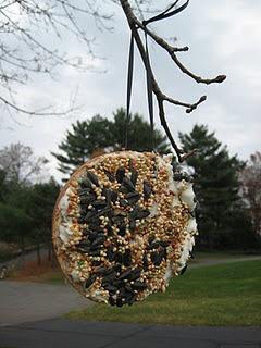 Bird feeder ideas..