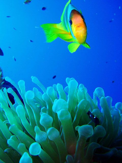 Tropical fish isn 39 t she lovely natures best pinterest for Exotic fish store