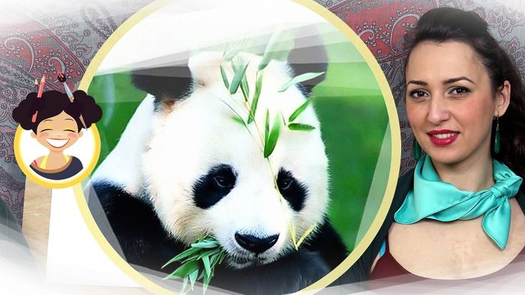 Panda - Miss maddy - lectii de desen