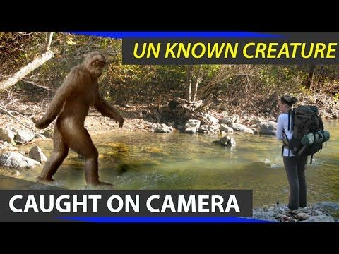 Mysterious Creatures Caught On Camera NH9 News, its leading Telugu news channel, a 24/7 LIVE news channel dedicated to live reports, exclusive interviews, breaking news, sports, weather, entertainment, business updates and current affairs.  Subscribe us @ https://www.youtube.com/channel/UCM5E-rHB4rvdA_hm8chsU7Q  Watch Live @ http://www.youtube.   #Mysterious Creatures Caught On Camera | TELUGU | NH9 News