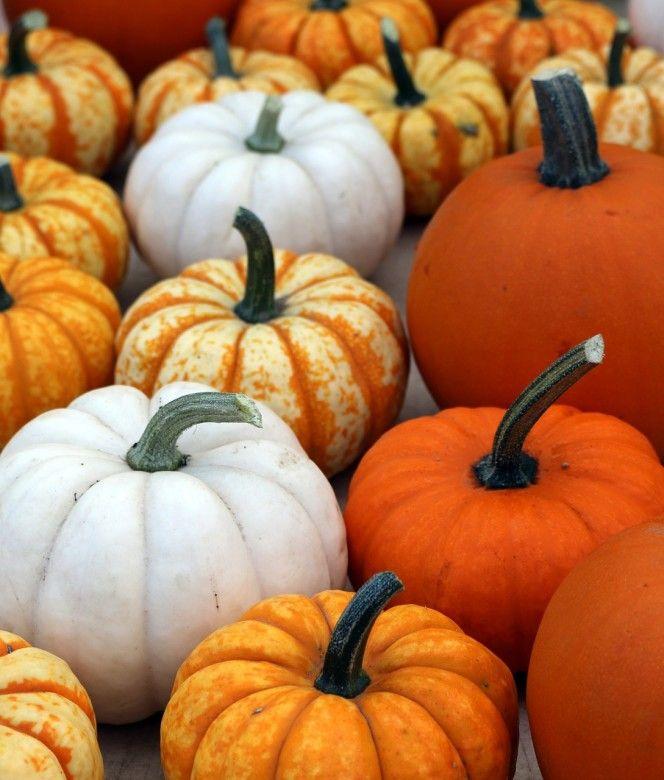 25 best ideas about pumpkin varieties on pinterest for Best pumpkins to grow