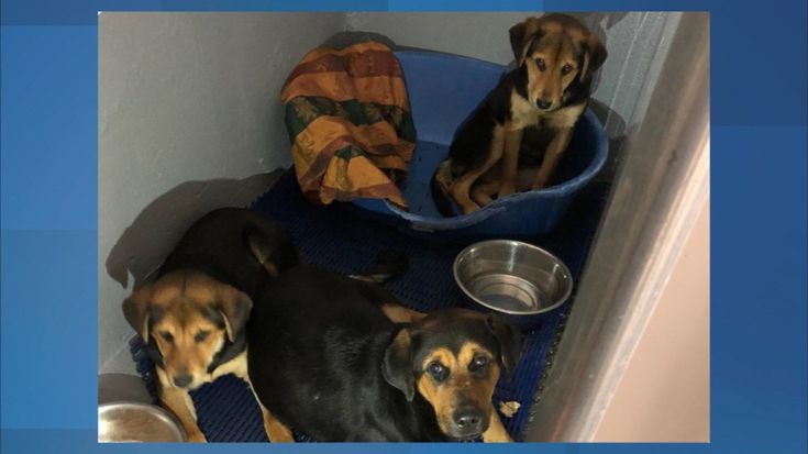 A mother dog and her two pups will soon find new homes after they were found abandoned in North Bergen.