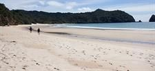 If you're coming to Coromandel, then experiencing the best of our local beaches is simply a must and the New Chums Beach Explorer tour is the way to see the best. Coromandel Peninsula, Coromandel Town, Tours & Activities, Coromandel Adventures.