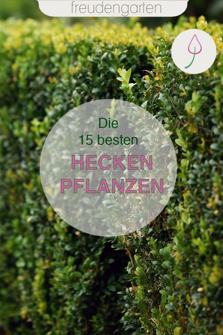 Pin Auf Garten Mit Pflanzen Gestalten