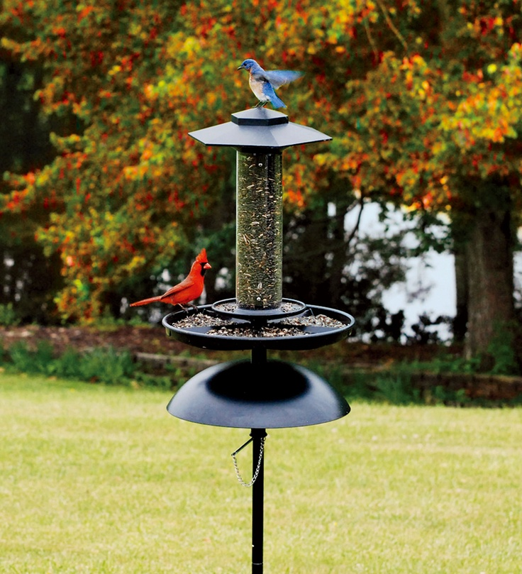 Stand alone feeder to place anywhere Free standing bird