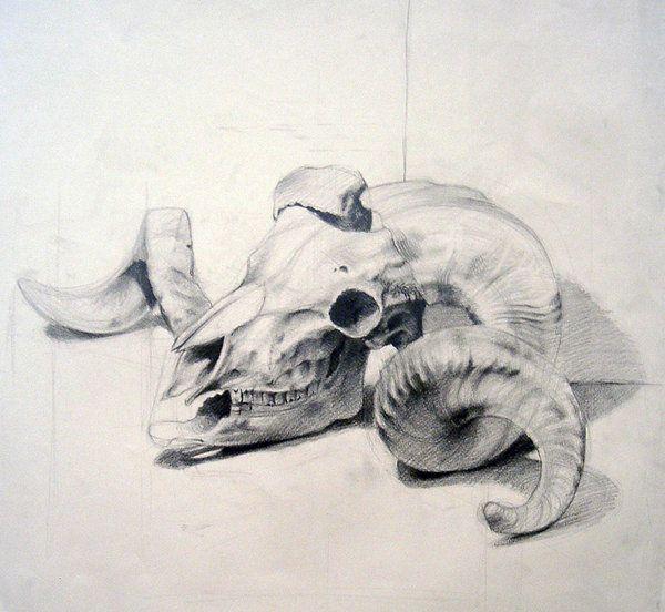 animal skull by ~dalocska on deviantART