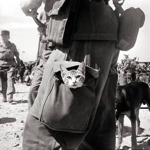A Legionnaire carrying a kitten in his leg pouch, Indochina 1956