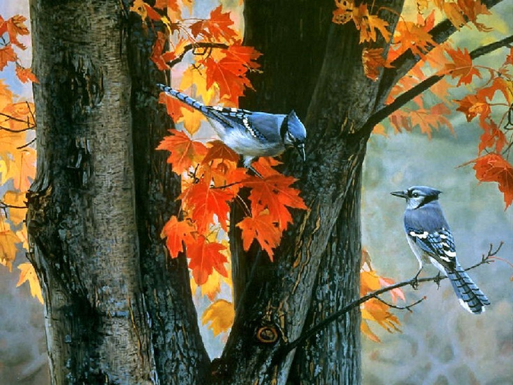 HD Wallpapers Cardinals birds - Autumn Cardinals ... |Fall Bird Paintings
