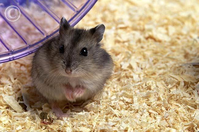 my hamster<3