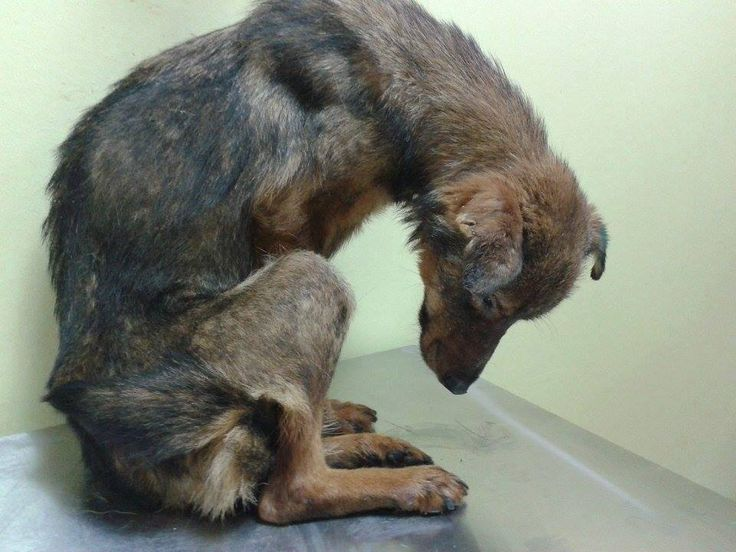 FAITH, the forgotten dog in a shelter in Romania. The dogs and cats there live in bad conditions but can be adopted out of state. They have few interests. How big is your heart?  I wish I could save them all!