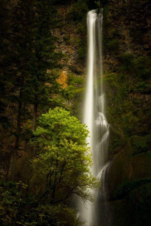 tulipnight:  Multnomah Falls byLuke Detwiler