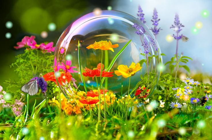 Скачать обои цветы, бабочка, мыльный пузырь, раздел цветы в разрешении 4288x2848