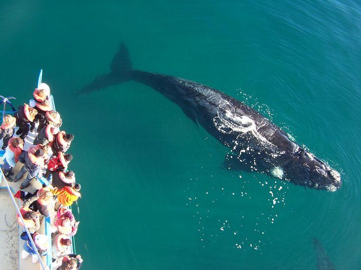 Avistamiento de Ballenas Puerto Madryn -  por Say Hueque Tours en Argentina en Flickr.
