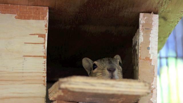Coast & Canyon Squirrel Release