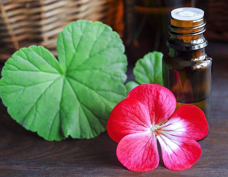 Geranium Oil: Benefits for Glowing Skin