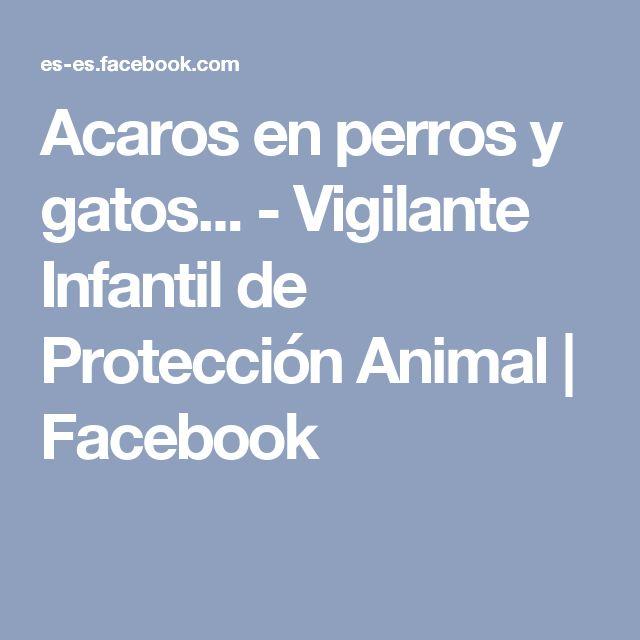 Acaros en perros y gatos... - Vigilante Infantil de Protección Animal   Facebook