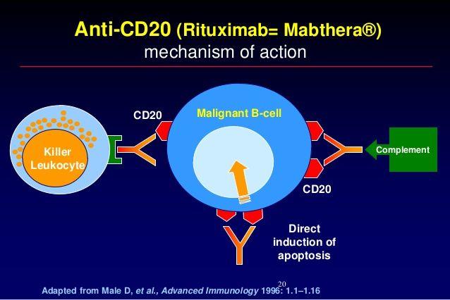 Výsledek obrázku pro rituximab  mechanism of action