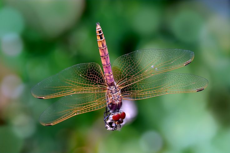 a pair of wings doesn't make you a dragonfly by Marcello Machelli on 500px
