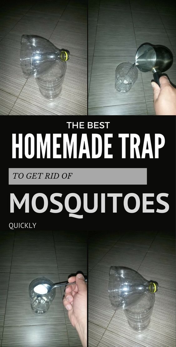 17 Mejores Ideas Sobre Trampas Para Mosquito En Pinterest