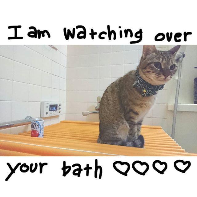 今日の#お風呂見守り隊 ( ・ᴗ・ )⚐⚑♥ 一部カビてるのはご愛嬌……😨💔😨 · 今日もお仕事ご苦労様です(笑) · · · #猫のおばあちゃん家出身 #チャチャにゃんこ #にゃんすたぐらむ#ねこ部#nekostagram #catstagram #猫 #cat #ねこ#고양이 #愛猫 #mycat #キジ猫 #きじねこ  #pecoねこ部 #きじねこ女子部 #browntabby #tabby #re_petpark #instacat #catstagram #ilovemycat #instagramcats #meow #pet #petstagram #ナデシル#petpark_love