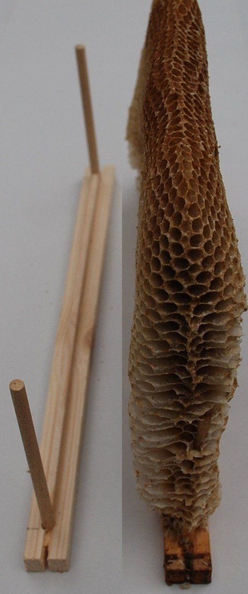 Beekeeping with the Warré hive -- Pros and cons of frames versus fixed comb