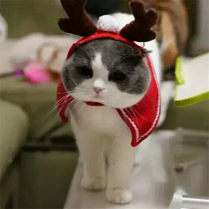 1pcs Lovely Christmas Hat for Dog Winter Pet Cat Dog Christmas Elk Antlers Horn Hats Cape Pet Costume Hat Grooming Accessories // FREE Shipping //     Buy one here---> https://thepetscastle.com/1pcs-lovely-christmas-hat-for-dog-winter-pet-cat-dog-christmas-elk-antlers-horn-hats-cape-pet-costume-hat-grooming-accessories/    #cat #cats #kitten #kitty #kittens #animal #animals #ilovemycat #catoftheday #lovecats #furry  #sleeping #lovekittens #adorable #catlover