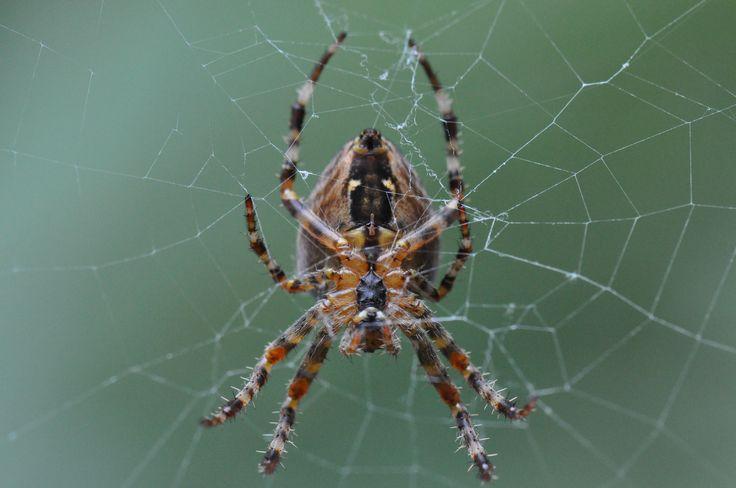 Spin - Spider ©gk24