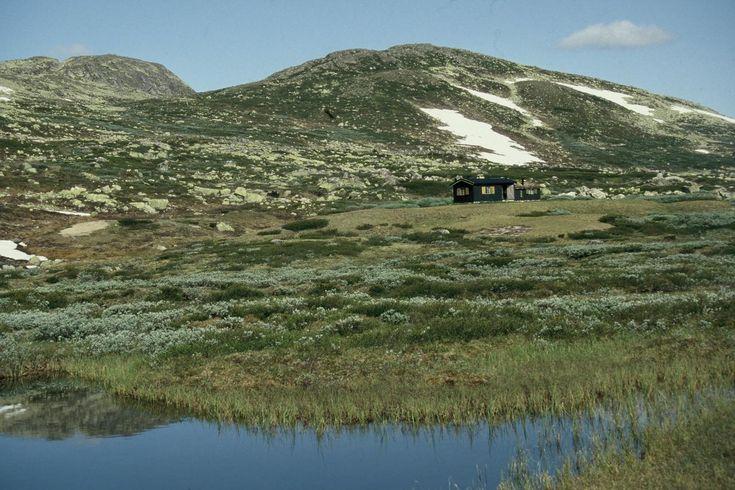 Mountain cabin, Hardangervidda, Norway. https://www.inatur.no/hytte/52cfbc86e4b006297cb2bd18/midtjonn-pa-hardangervidda-ekte-hytteliv-pa-skikkelig-hoyfjell  Inatur.no
