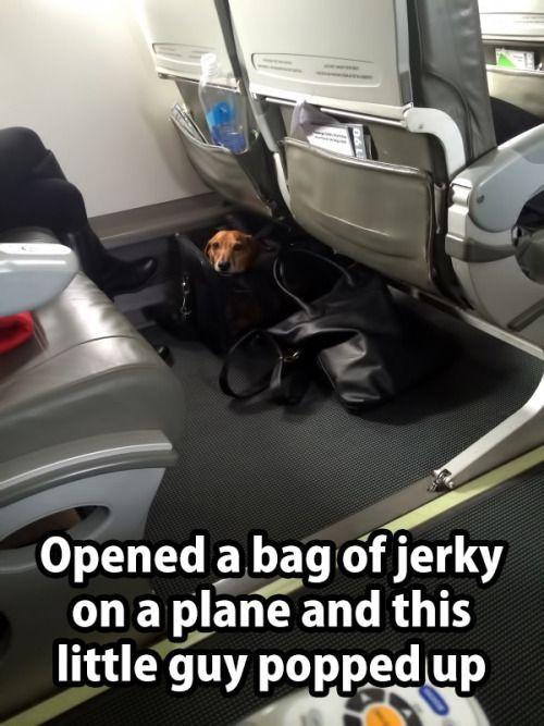 Haha too stinking cute. I wish I had a neighboring Dachshund on all the flights I take