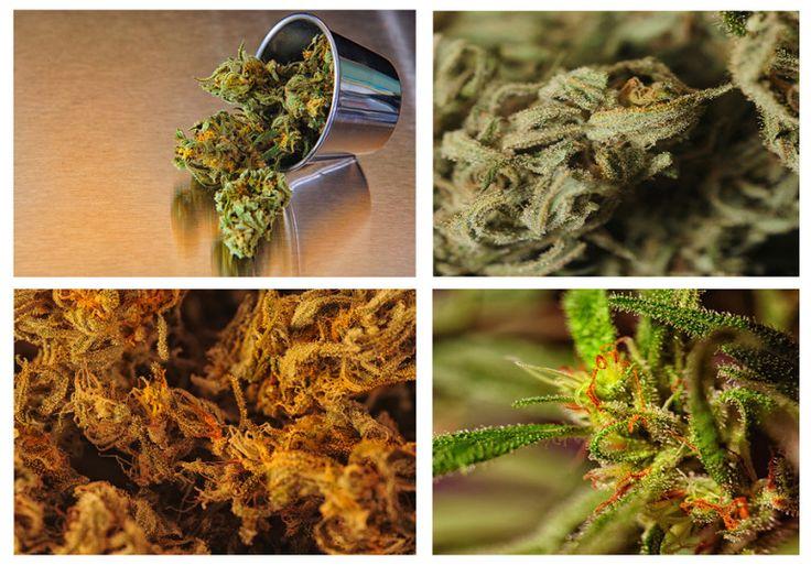 Types of Medical Marijuana Strains