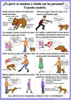 Miedos en perros