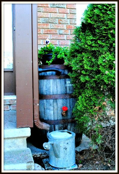 How to Convert a Whisky Barrel into a Water Barrel     http://smallgardenideas.net/how-to-convert-a-whisky-barrel-into-a-water-barrel/