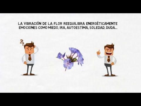 Flores de Bach - YouTube