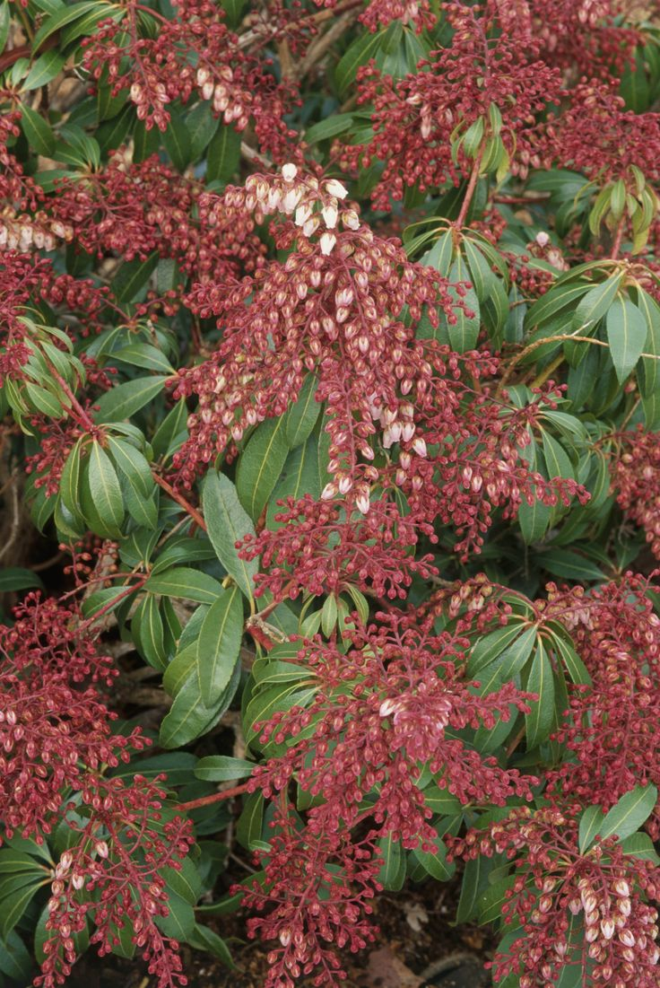 Flowers that bloom in winter months - 9 Lovely Plants That Bloom In The Chilly Winter Months