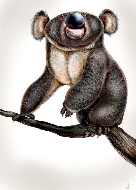 Funny Animal Illustrations by Jean Baptiste Vendamme