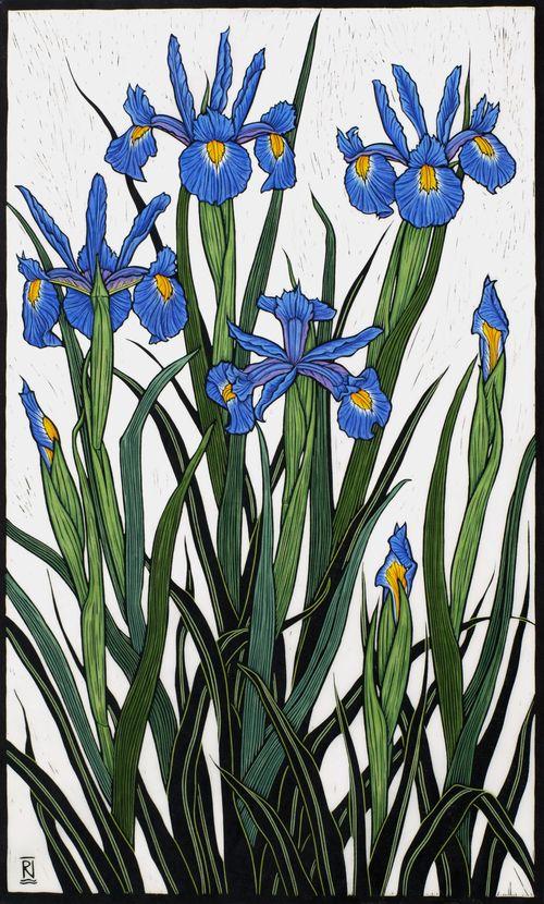 Irises82.5 x 49.5 cm  Edition of 50Hand coloured linocut on handmade  Japanese paper.   Rachel Newling.