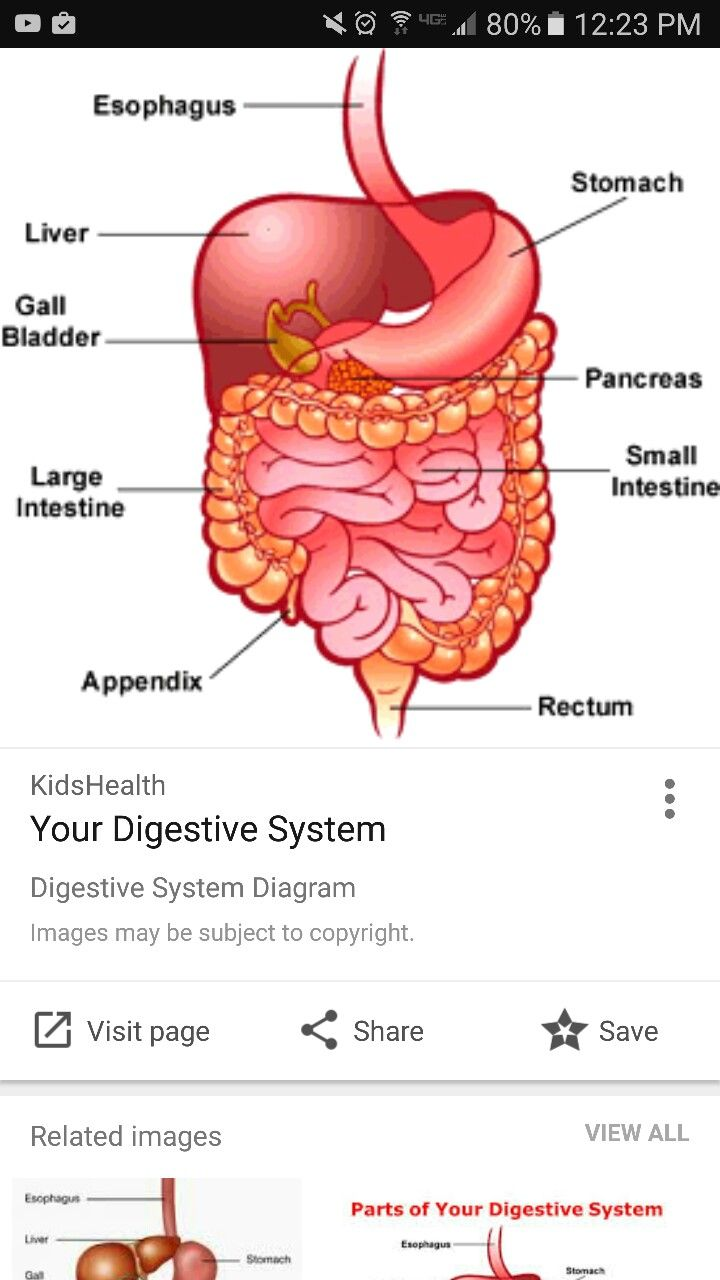 Pin by Elizabeth Morgan on Anatomy and Physiology Microbiome Article ...