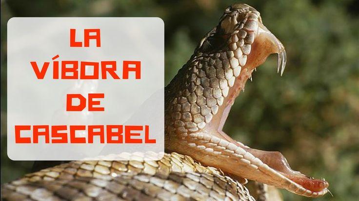 La víbora de cascabel #animales #víbora #cascabel #curiosidades @curiosfera