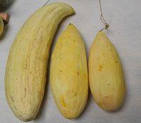 Банановая дыня