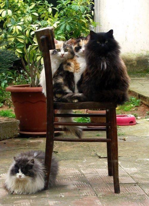 Feline friends.