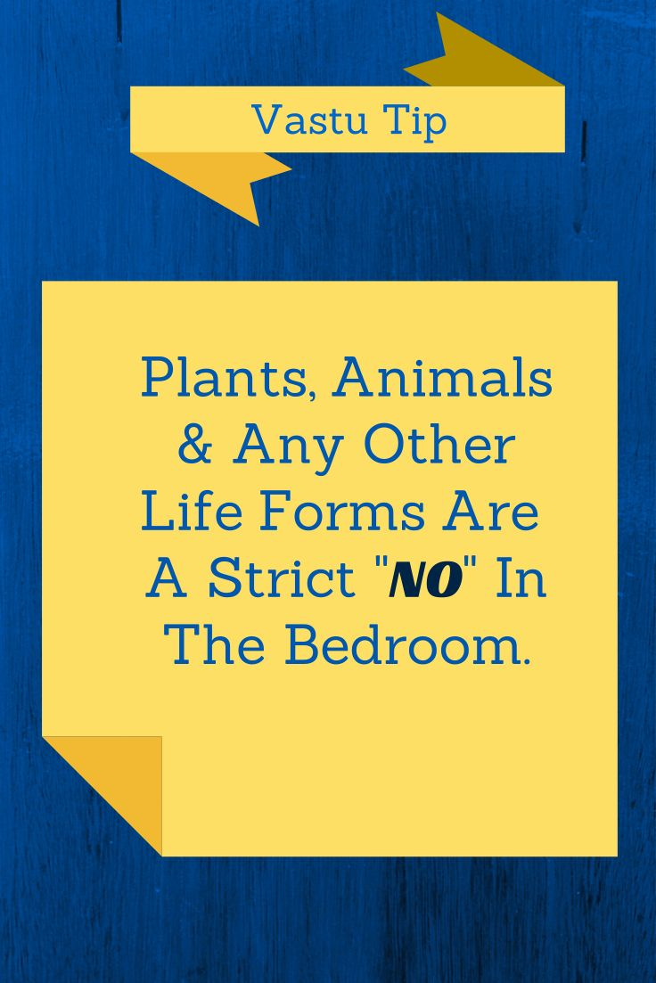 Vastu Shastra Tip for Bedroom - Never allow plants or animals in your bedroom at-least in the night time.