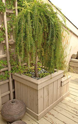 les 25 meilleures id es de la cat gorie arbuste en pot sur pinterest arbres en pots arbres en. Black Bedroom Furniture Sets. Home Design Ideas
