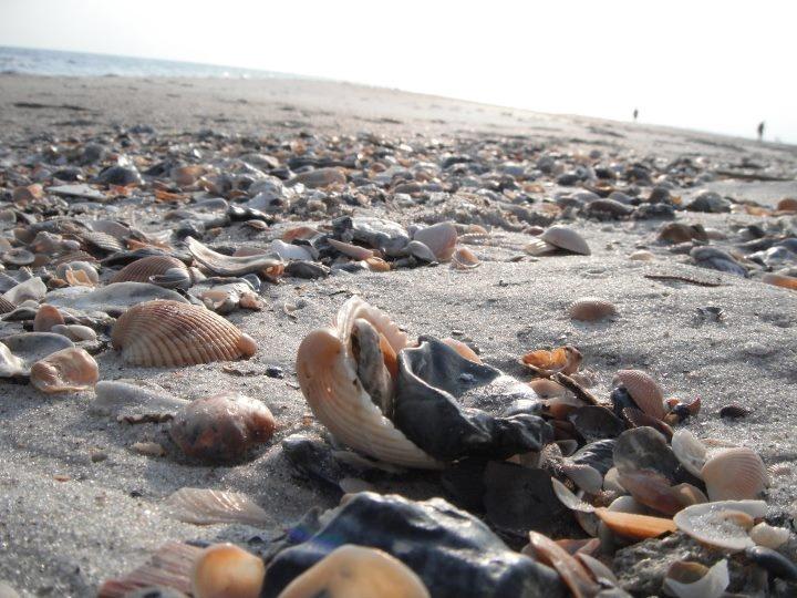 Caswell Beach, Oak Island, NC Fantastic place to find seashells!