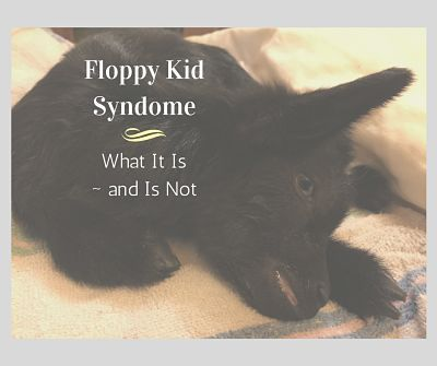 Because of the simple name of this syndrome, a lot of people assume they have a case of floppy kid whenever they have a kid that's, well, floppy. However, it is a well defined condition that only occurs between three days and two weeks of age. The textbooks say it has been seen up to …