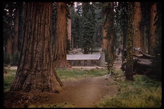 """Sequoia"" name of store"