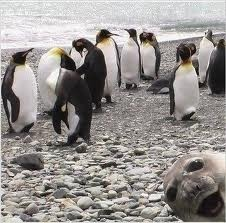 dierenplaatje met achtergrond