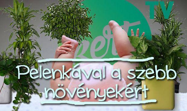 PELENKÁVAL A KISZÁRADT NÖVÉNYEK ELLEN - McMenemy Márk videója: http://kert.tv/pelenkaval-a-kiszaradt-novenyek-ellen-video/