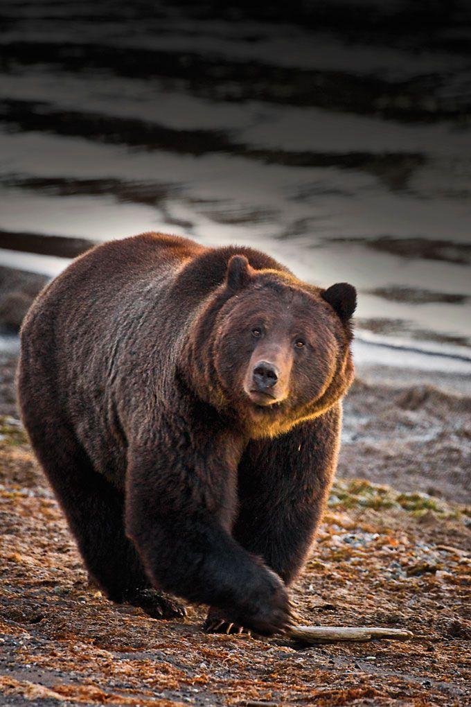 Yellowstone National Park Animals | Yellowstone Photo Guide: Wildlife…