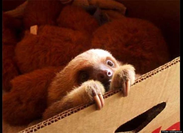 Best Sloths Images On Pinterest Sloths Baby Sloth And Baby - 5 month old baby and sloth are the most unlikely of best friends